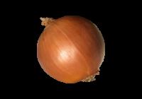 たまねぎ(玉ねぎ・オニオン・onion)無料画像page2