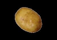 じゃがいも(じゃが芋・ジャガイモ・potato)無料画像page2