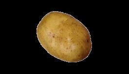 じゃがいも(じゃが芋・ジャガイモ・potato)無料画像