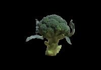 ブロッコリー(ぶろっこりー・メハナヤサイ・ミドリハナヤサイ・broccoli)無料画像