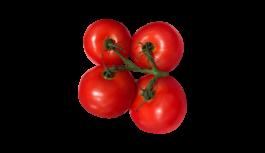 トマト(とまと・ミニトマト・tomato)無料画像